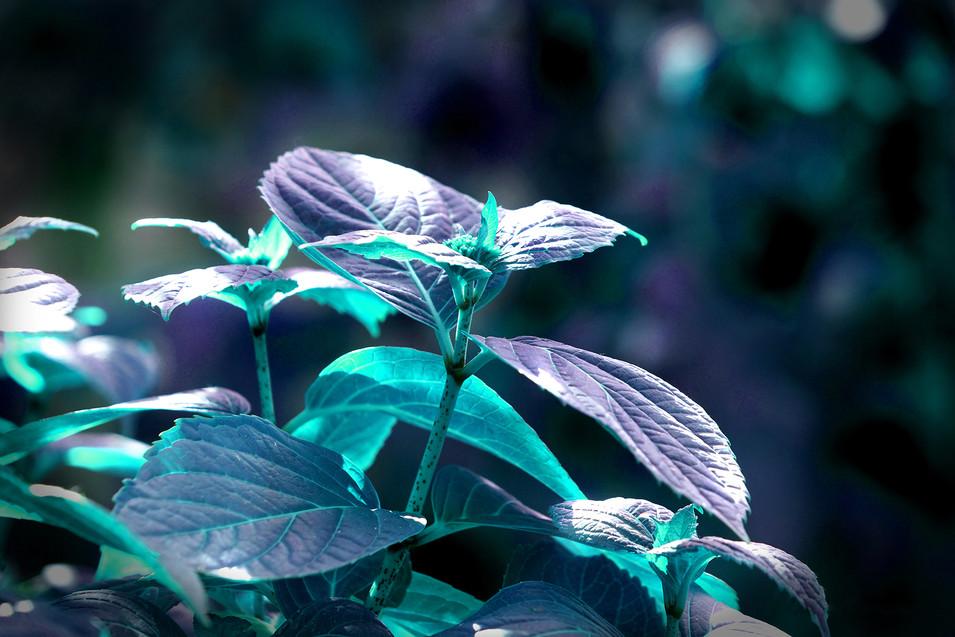 Winters Plant