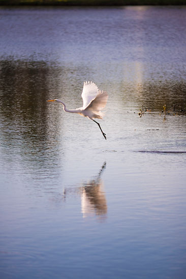 Sarasota FL-5652.jpg