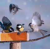 Shutterstock småfåglar vid foderbord png