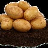 Stubbetorp potatis.png
