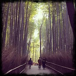 KYT0030 - Arashiyama Bamboo Grove.JPG