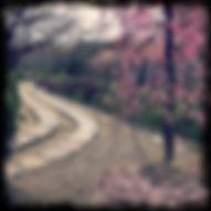 KYT0047 - Philosophers Path.JPG