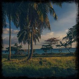 palm-trees-in-santo-domingo-dominican-republic-(credit-unsplash-abdiel-ant).JPG