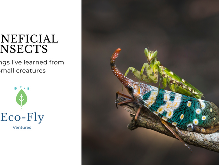 BENEFICIAL INSECTS IN SERVICE OF MANKIND AND PLANET EARTH