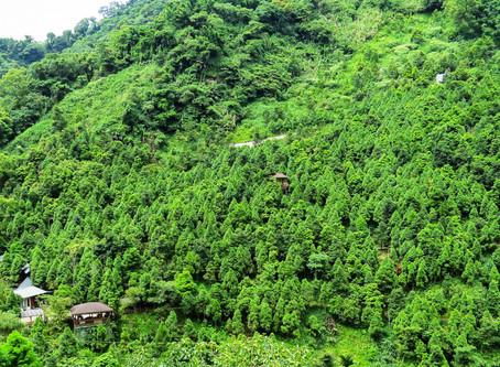 「和準林場」賴水和──尊重生命熱愛土地 臺灣版-種樹的男人