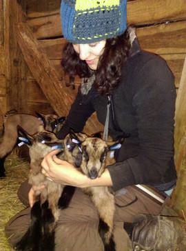 Eladó alpesi gödölye - alpesi anya