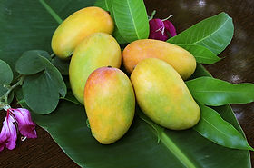 Indian-mangoes-in-the-US.jpg