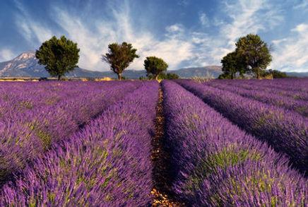 france-agriculture-1112.jpg