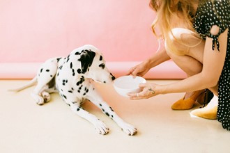 Top 3 Healthiest Brands of Dog Food: Why You Shouldn't Be Cheap When It Comes to Dog Food
