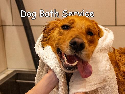 Dog-Bath-Service-Backyard-DogCare-North-