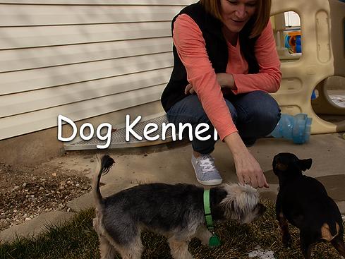 Dog-Kennel-Backyard-DogCare-North-Salt-L