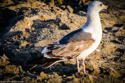 Bird at Huntington Beach