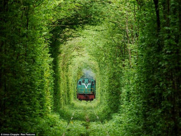 tunnel-of-love12.jpg