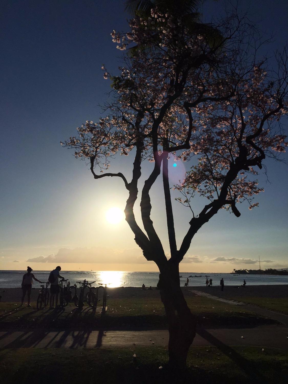 海に映る夕日はため息が出る美しさ