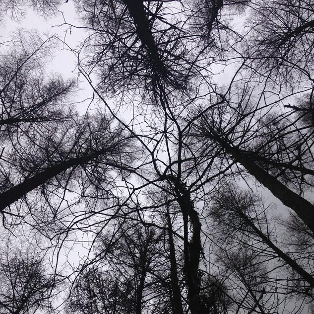 documenting a tree hug