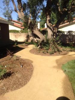 A Sandoval Tree Service 7