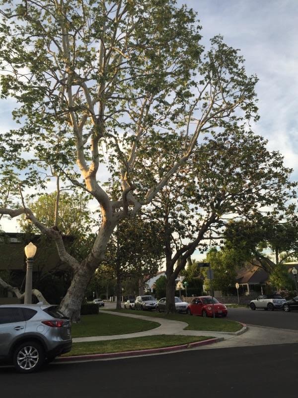 A Sandoval Tree Service 14