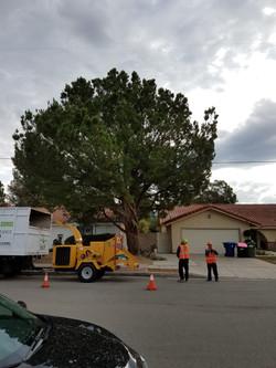 A Sandoval Tree Service