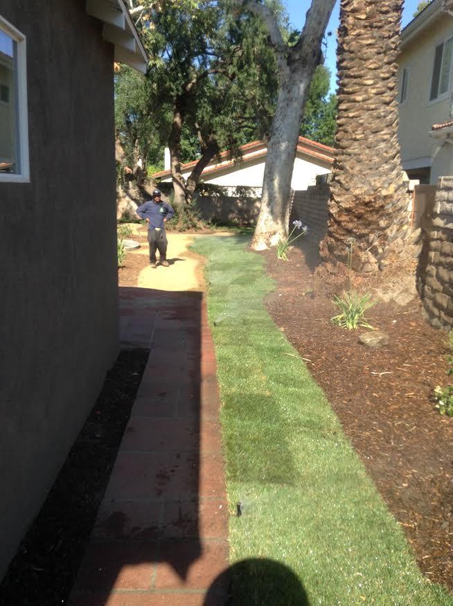 A Sandoval Tree Service 6