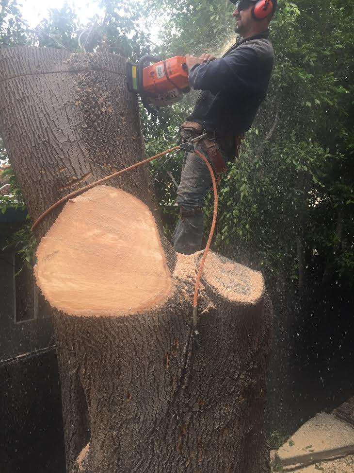 A Sandoval Tree Service 19