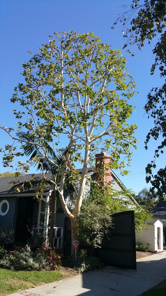 A Sandoval Tree Service 18