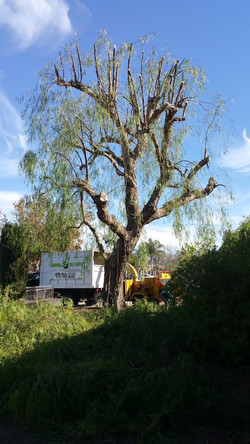 A Sandoval Tree Service 17