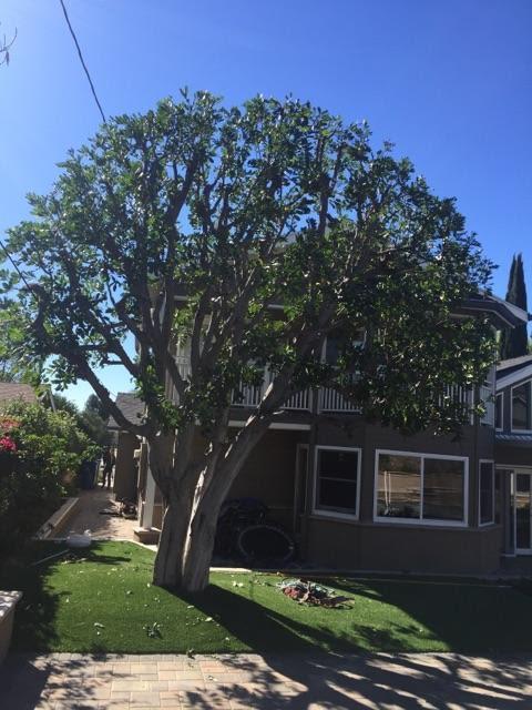 A Sandoval Tree Service 15