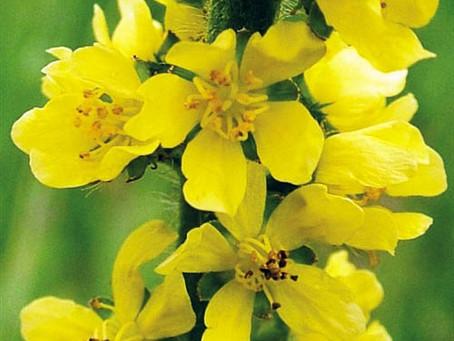 Coronavirüs ile gelen duygu türbülansına Dr. Bach çiçek Özleri ile çözümler