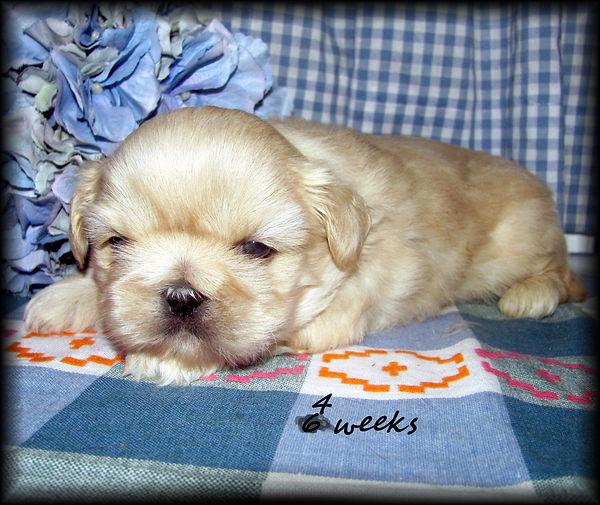 Sophia's #2 male - 4 weeks.JPG