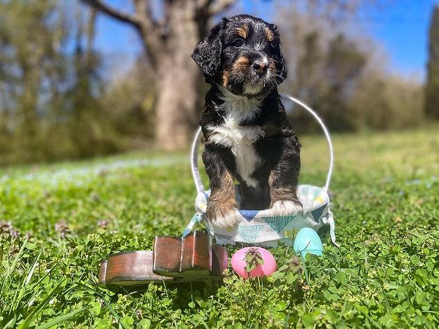 Abby's Sailor in Easter basket 5 weeks.j