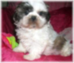 Sophia #5 - 8 weeks.JPG