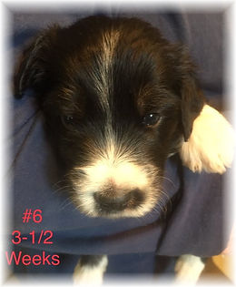 Abby #6 3.5 weeks.jpg