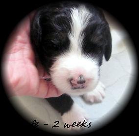 Abby's 2 weeks 016.JPG