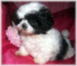 Sophia #1 - 8 weeks.JPG