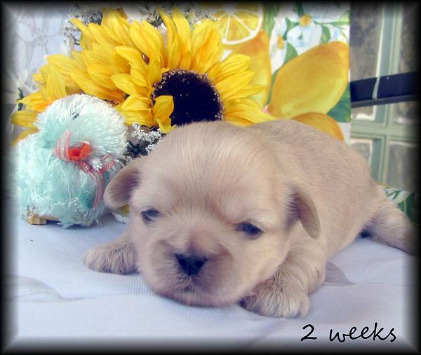 Sophia's #2 male 2 weeks.JPG