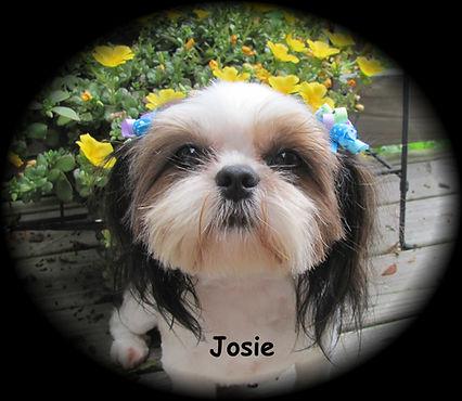 Josie for web.JPG