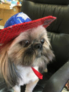 Watson is getting ready for the 4th.JPG
