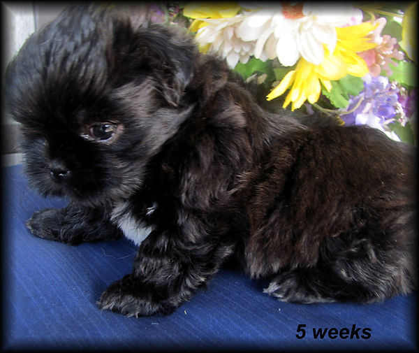 Sophia's #6 female - 5 weeks.JPG