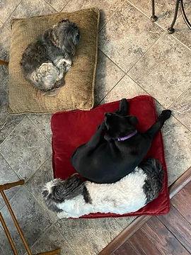 Lucas, Maisy and cat sept. 2020.jpg