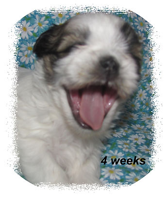 Willow #1 4 weeks.JPG