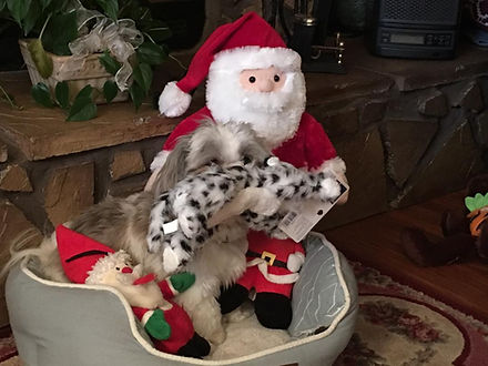 Brody Merry C hristmas 2019.jpg