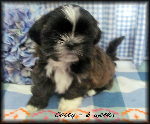Sassy's fe 6 weeks.JPG
