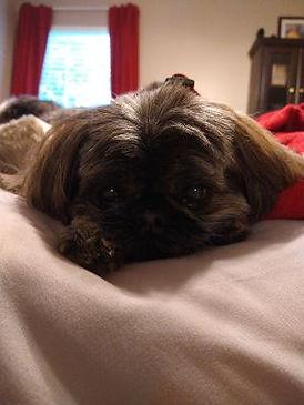 Maisy Long 11 years old.jpg