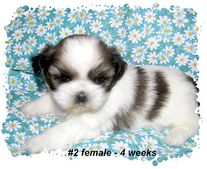 Willow's #2 - 4 weeks.JPG