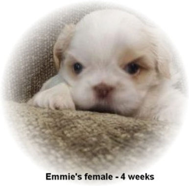 Emmie's female 4 weeks face.jpg