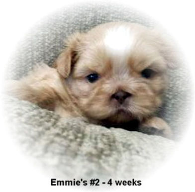 Emmie's #2 male 4 weeks face.jpg