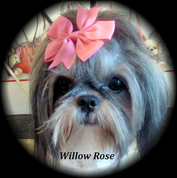 Willow Rose 005.JPG