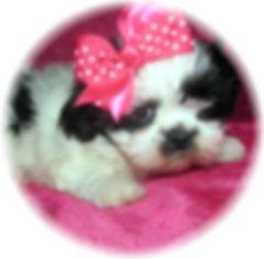 Sophia # 4 - 8 weeks.JPG