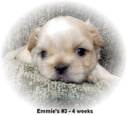 Emmie's #3 male 4 weeks face.jpg