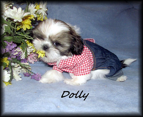 Willow's Dolly in jeans 9 weeks.JPG